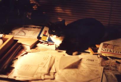 Cluttercat